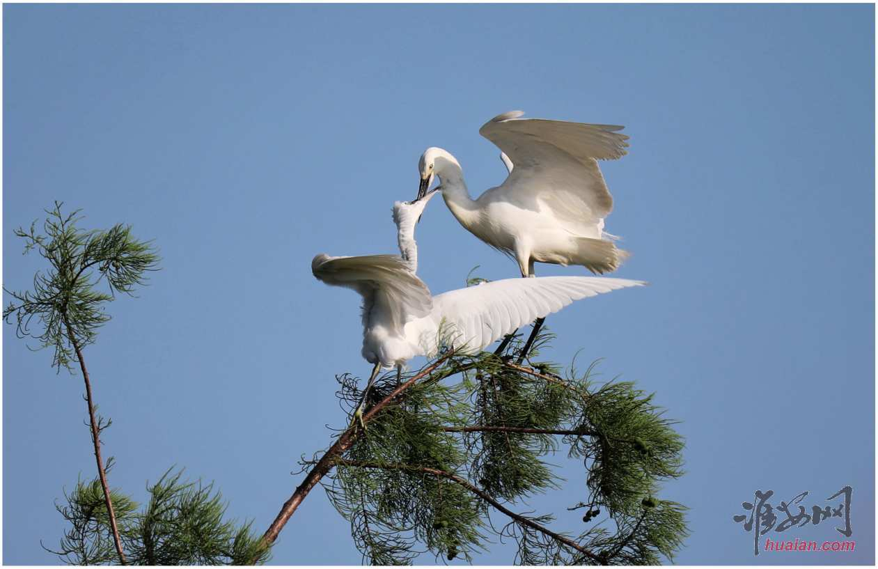 钵池山观鸟,第1张
