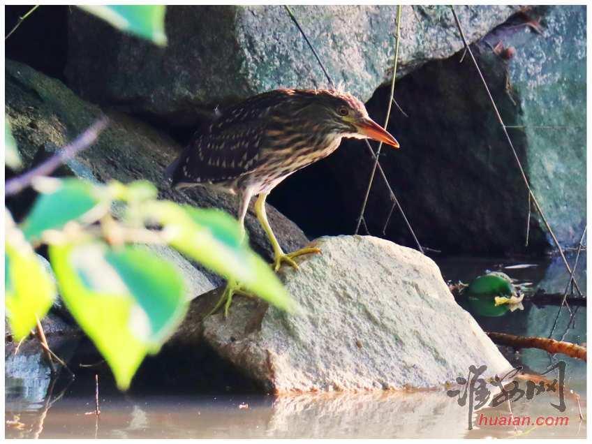 钵池山观鸟,第6张