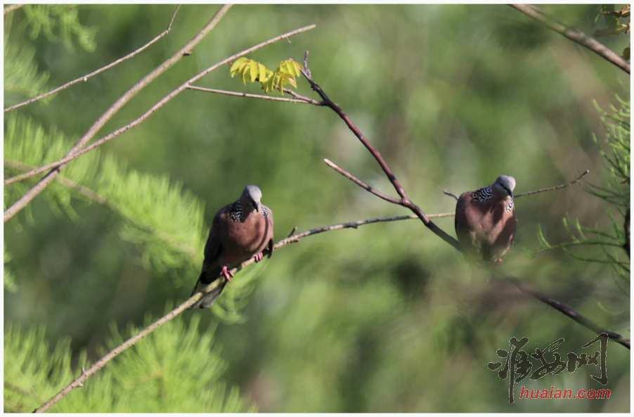 钵池山观鸟,第9张